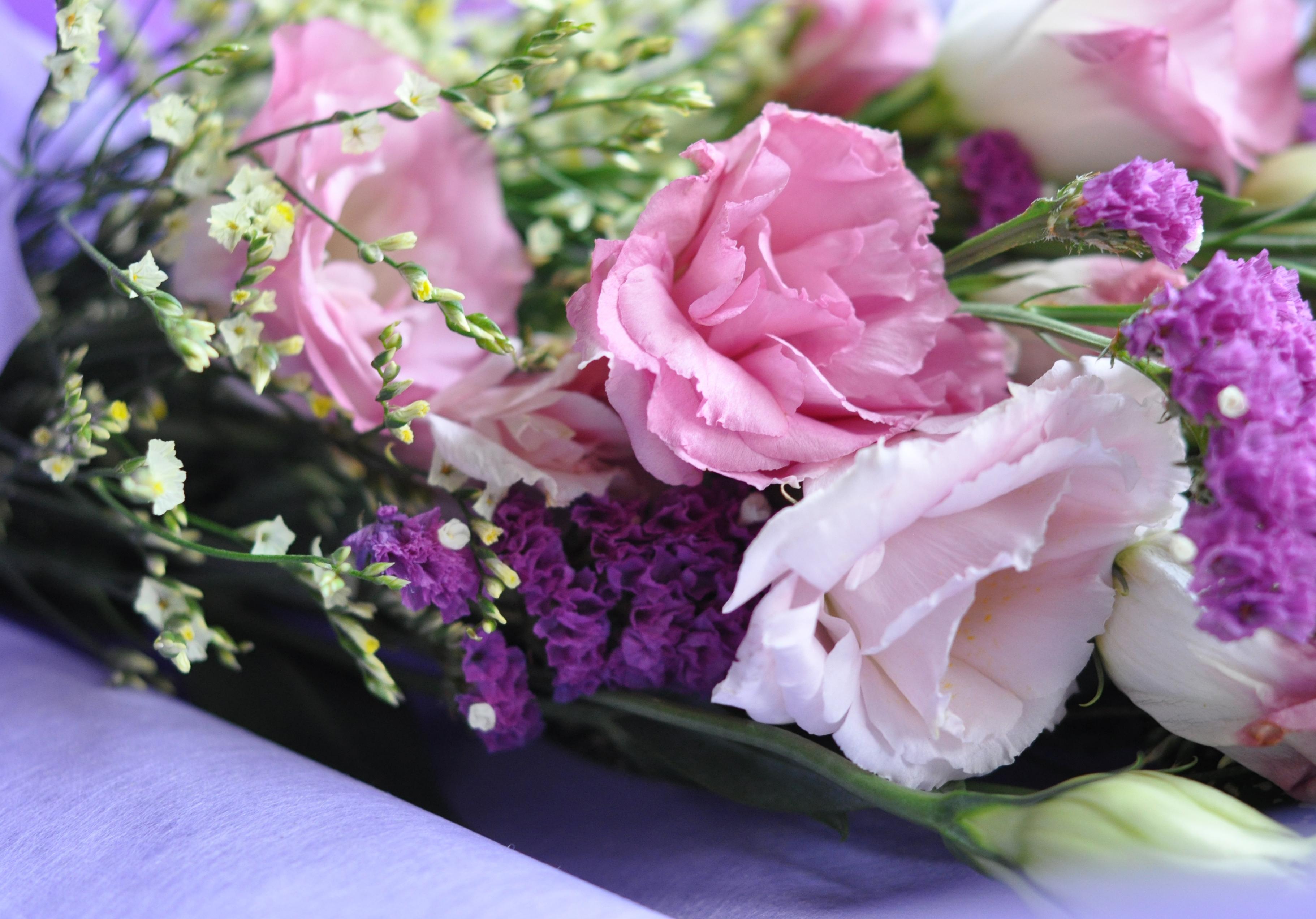 Цветок эхинацея. Эхинацея пурпурная. Выращивание эхинацеи