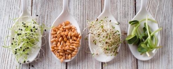 Зерно и питание детей: что общего?